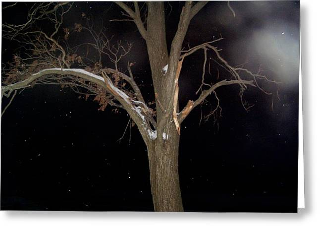 Tree On A Dark Snowy Night Greeting Card by Victoria Sheldon