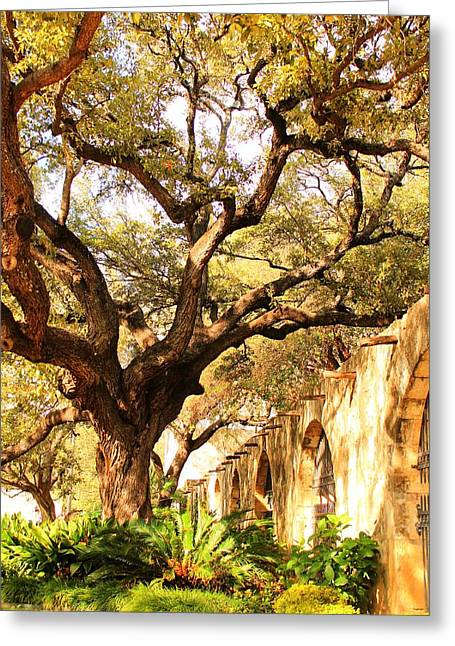 Tree Over Alamo Gardens II Greeting Card