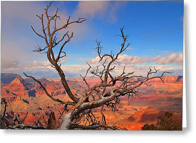 Tree Over Grand Canyon Greeting Card
