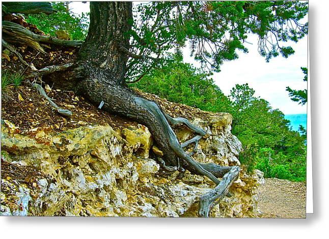 Tree Root Tenacity Greeting Card