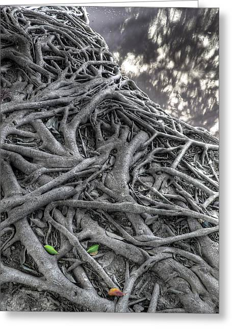 Tree Roots Greeting Card by Natthawut Punyosaeng