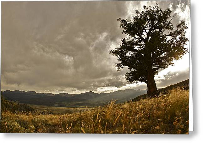 Tree Greeting Card by Scott Askins