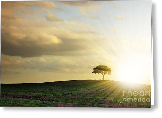 Tree Silhouette Greeting Card by Carlos Caetano
