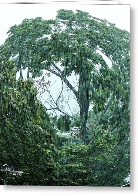 Tree Swirl Downpour Greeting Card