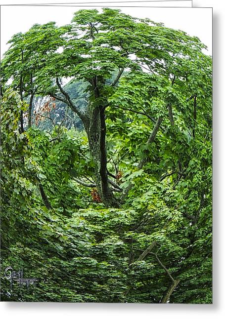 Tree Swirl Greeting Card by Glenn Feron