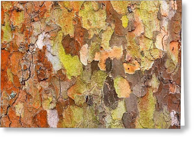 Tree Texture Greeting Card