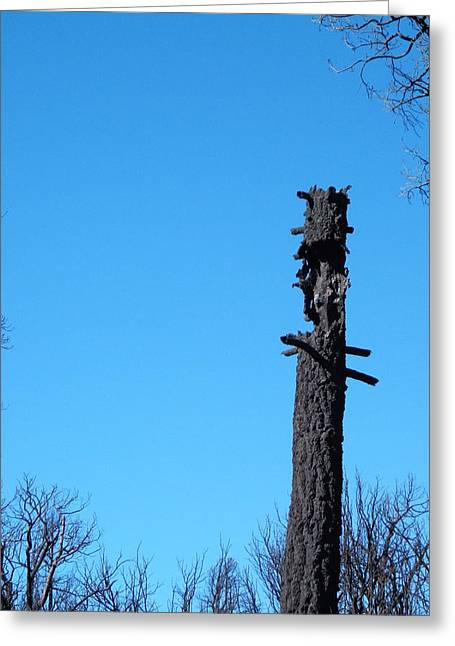 Tree Trunk Burned Greeting Card by Naxart Studio