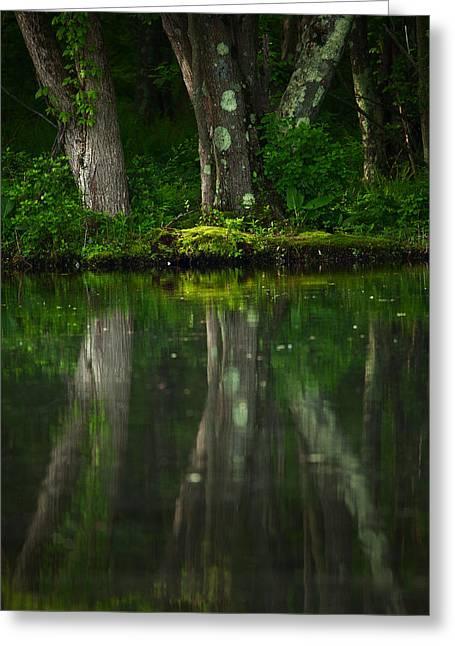 Tree Trunks Greeting Card by Karol Livote