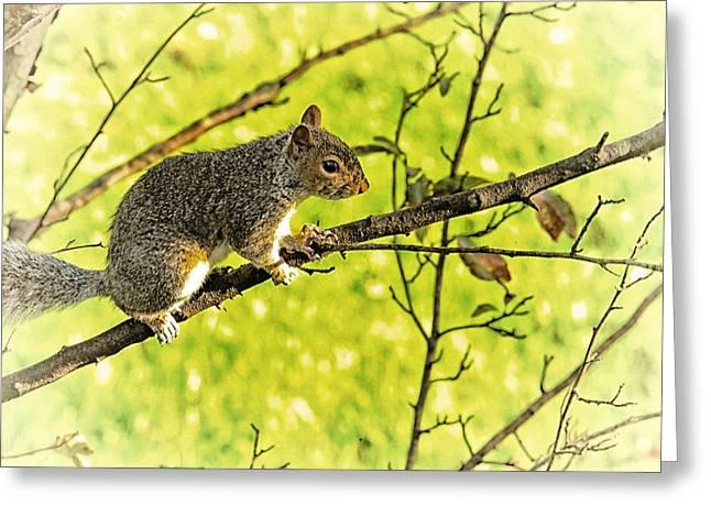 Tree Visitor Greeting Card by Karol Livote