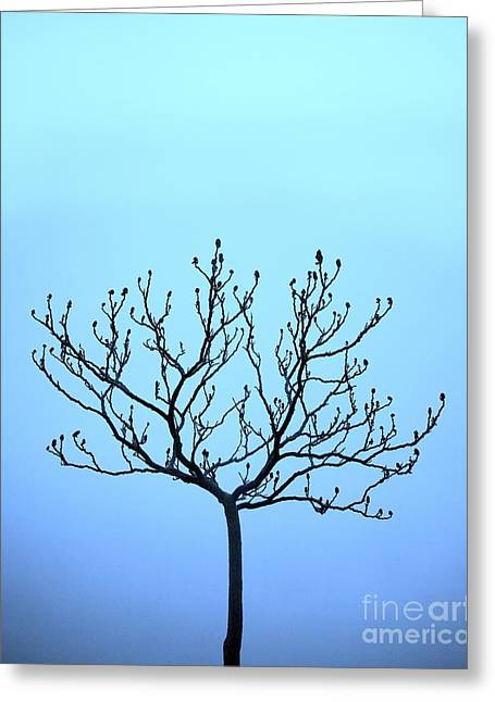 Tree With The Blues Greeting Card