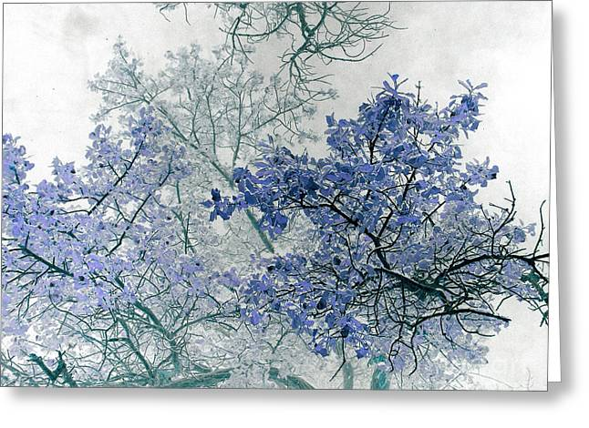 Trees Above Greeting Card