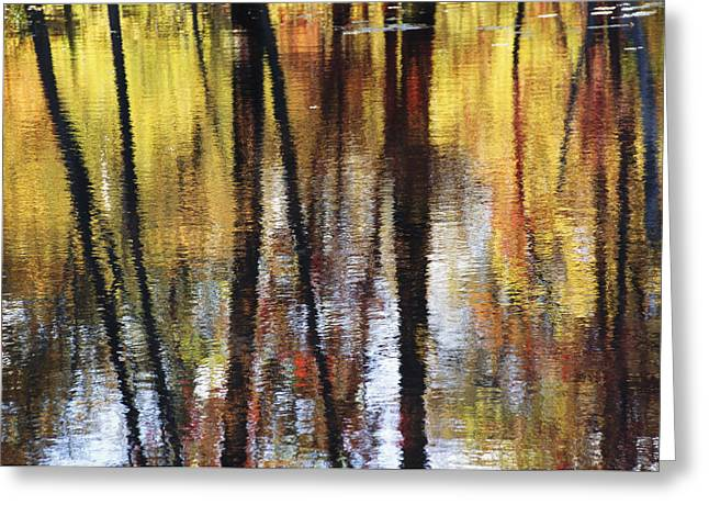 Trees And Fall Foliage Reflected Greeting Card by Medford Taylor