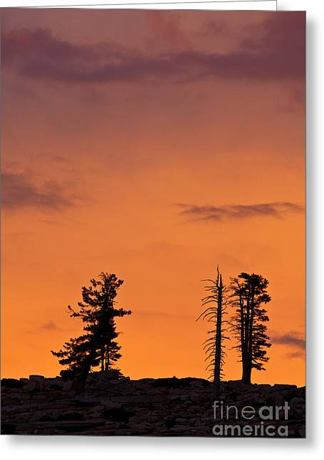 Trees At Sunset Greeting Card