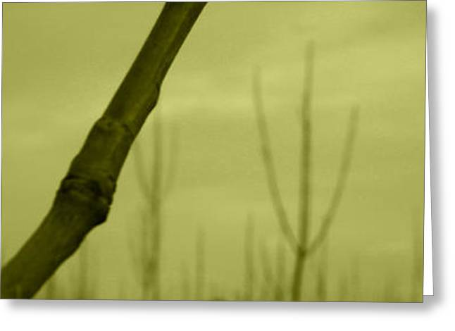 Trees Greeting Card by Hamed Manoochehri