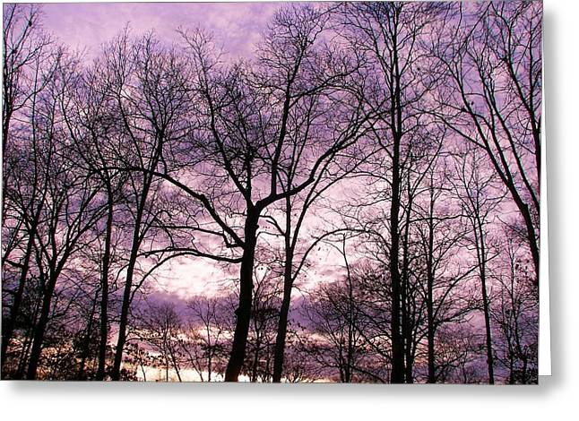 Greeting Card featuring the photograph Trees In Glorious Calm by Pamela Hyde Wilson