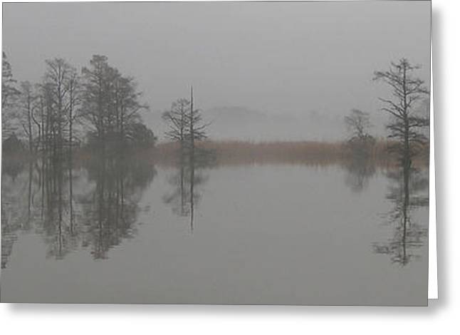 Trees In The Mist Panorama Greeting Card