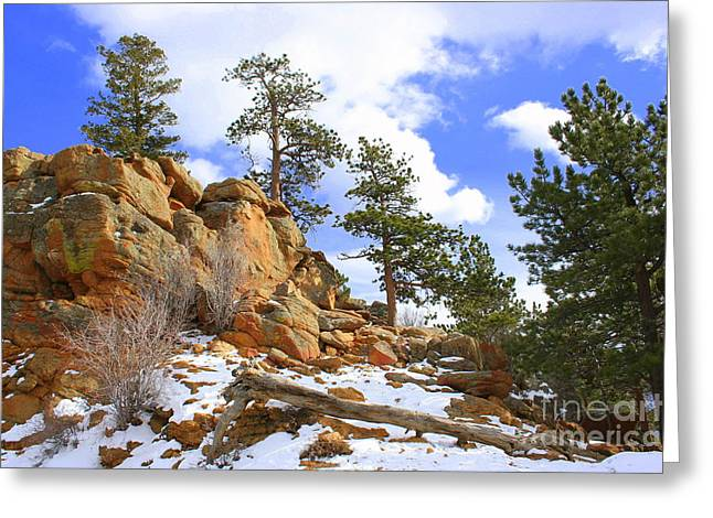 Trees In The Rocks Greeting Card by Julie Lueders