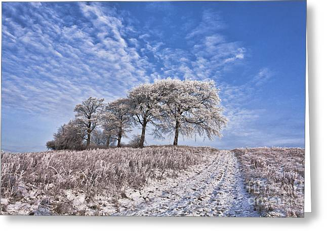 Trees In The Snow Greeting Card by John Farnan