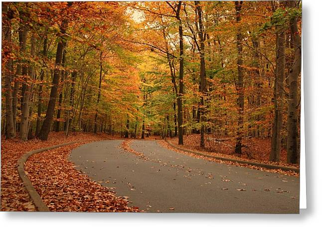 Trees Of Autumn - Holmdel Park Greeting Card by Angie Tirado