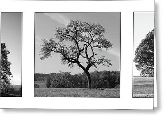 Trees On Canvas Greeting Card by Bruno Santoro