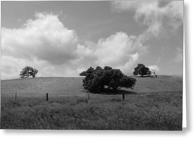 Greeting Card featuring the photograph Trees On The Hillrise by Kathleen Grace