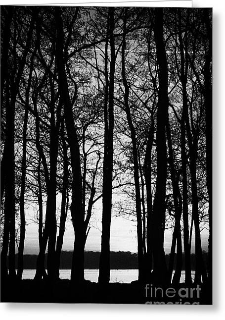 Trees On The Lough Neagh Shoreline County Antrim Northern Ireland Greeting Card
