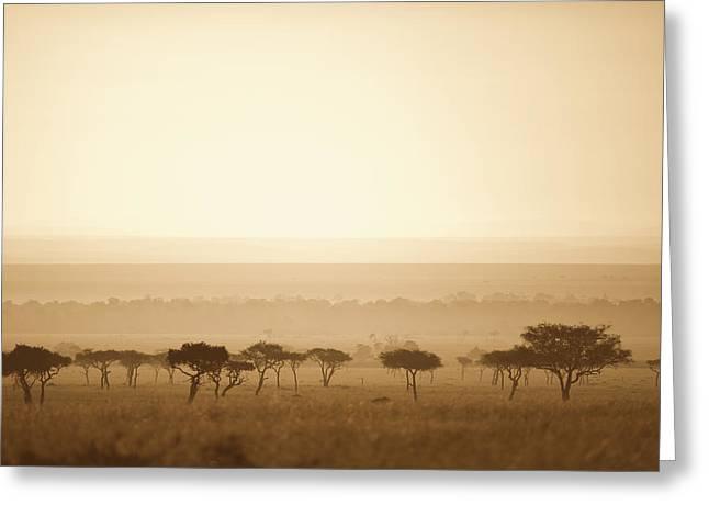 Trees On The Savannah At Sunset Masai Greeting Card by David DuChemin
