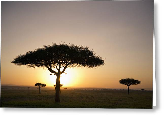 Trees On The Savannah With The Sun Greeting Card by David DuChemin
