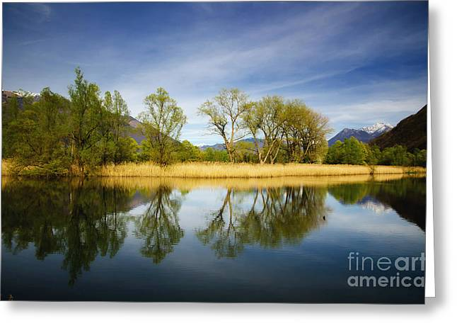 Trees Reflections On The Lake Greeting Card