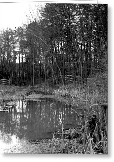 Trees With Pond Greeting Card by Terry Thomas