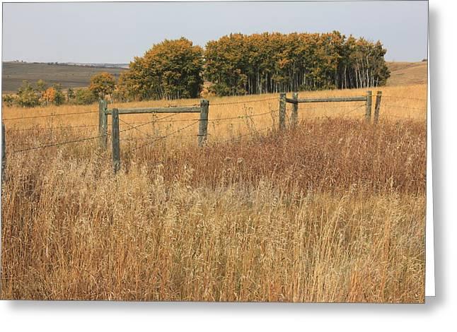 Trembling Aspens In Autumn Greeting Card by Jim Sauchyn