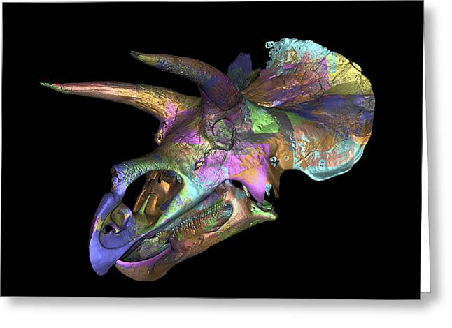 Triceratops Dinosaur Skull Greeting Card by Smithsonian Institute
