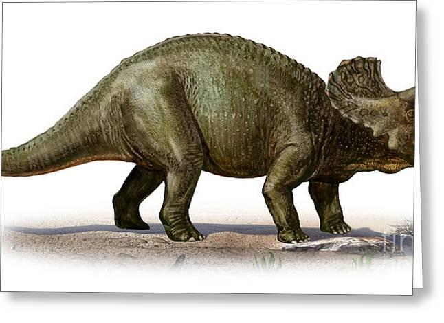 Triceratops Prorsus, A Prehistoric Era Greeting Card by Sergey Krasovskiy