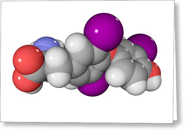 Triiodothyronine Hormone Molecule Greeting Card