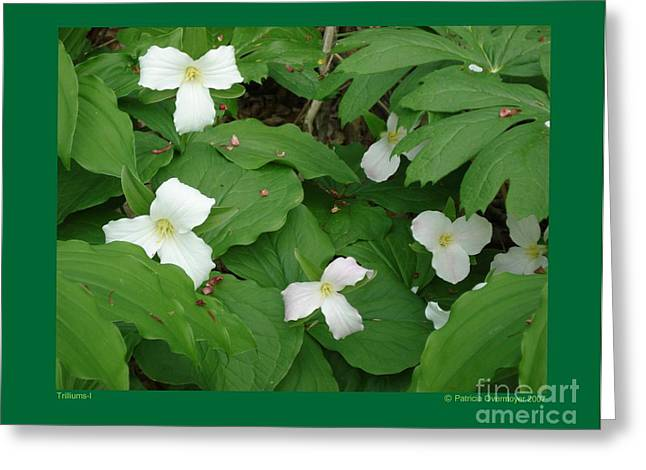 Greeting Card featuring the photograph Trilliums-i by Patricia Overmoyer