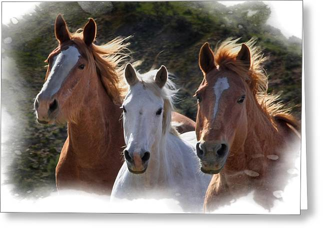 Greeting Card featuring the photograph Trio by Judy Deist