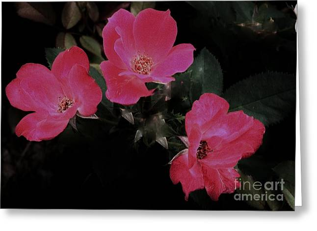 Trio Of Roses Greeting Card by Marsha Heiken