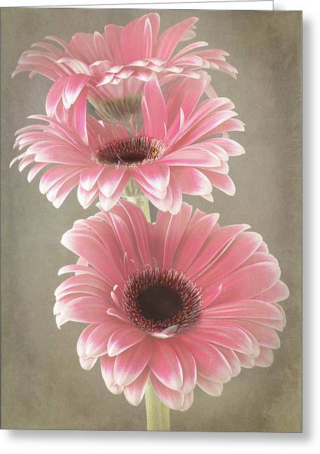 Triple Beauty Greeting Card by Fiona Messenger