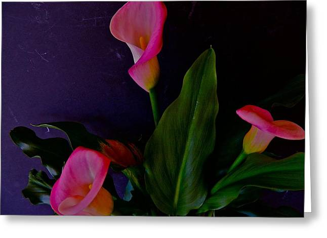 Triplets Of Calla Lilies Greeting Card by Randy Rosenberger