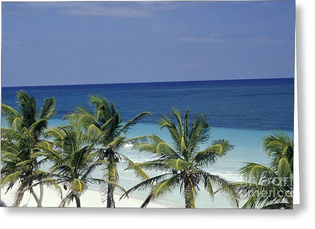 Greeting Card featuring the photograph Tropical Paradise Sian Kaan Mexico by John  Mitchell