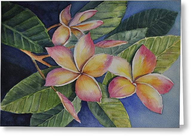 Tropical Plumerias Greeting Card by Sandy Fisher