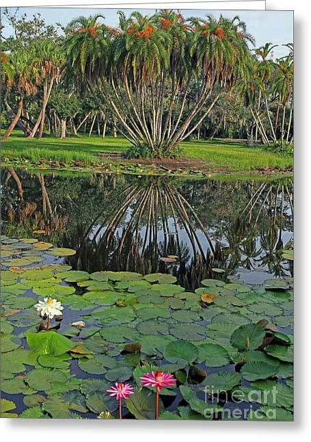 Greeting Card featuring the photograph Tropical Splendor by Larry Nieland