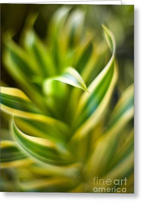 Tropical Swirl Greeting Card