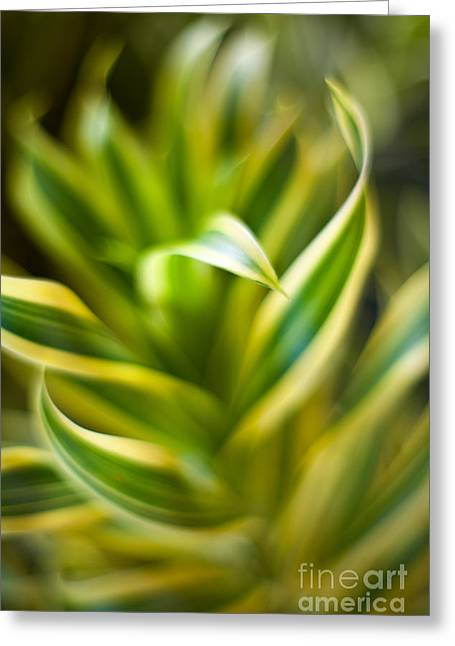Tropical Swirl Greeting Card by Mike Reid