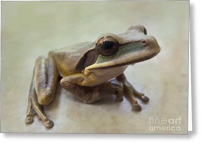Tropical Tree Frog II Greeting Card