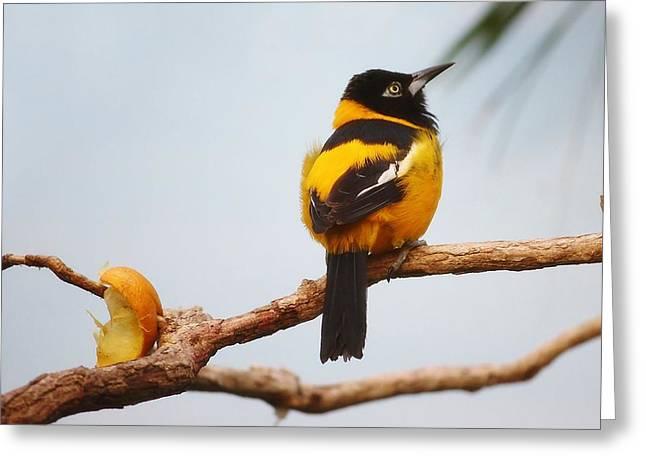 Troupial Bird Greeting Card by Paulette Thomas
