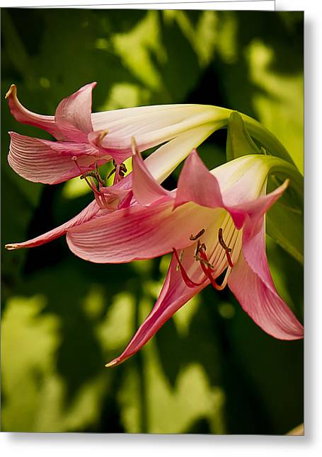 Trumpets Greeting Card by Michael Putnam