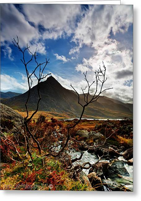 Greeting Card featuring the photograph Tryfan And Tree by Beverly Cash