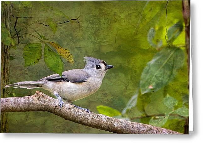Tufted Titmouse In The Forest Greeting Card by Bonnie Barry