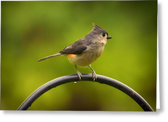 Tufted Titmouse On Pole Greeting Card by Bill Tiepelman